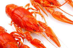Background from lobsters Stock Photos