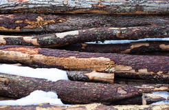 Background logs with snow Royalty Free Stock Photos