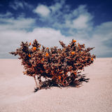 Background lone plant in the desert Royalty Free Stock Image