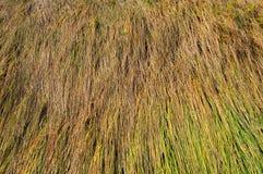 Background of long grass texture Stock Photos
