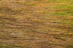 Background of long wet yellow grass texture Stock Photography