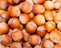 Background of the lot of hazelnut Stock Images