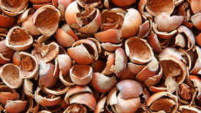Background of the lot of shell of hazelnut Stock Image