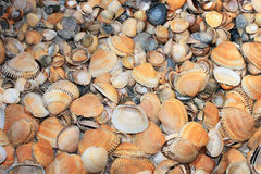 The background from lots of different shells Stock Images