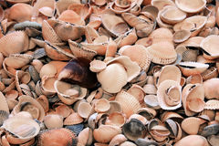 The background from lots of different shells Royalty Free Stock Images