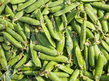 Background of lots of green snow peas Stock Photo