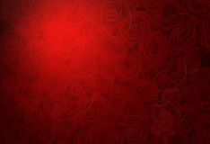 Background with lots of roses Stock Images