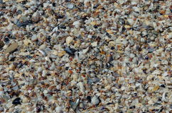 Background with colored shells Royalty Free Stock Photography