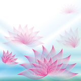 Background with lotuses Royalty Free Stock Photography