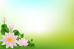 Background with Lotuses. Vector. Background with Lotuses, leaves and tangier lines Stock Photo