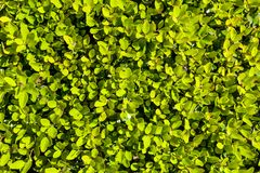 Background with lush bright green vegetation. 
