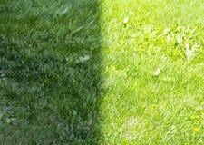 Background of lush green grass Stock Photo