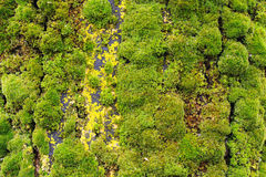 Background of lush green moss Stock Images