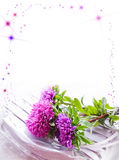 Background with lyings asters Stock Images
