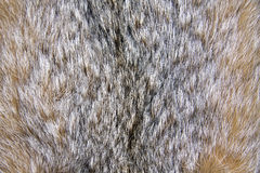 Background of lynx. Fur closeup Stock Images