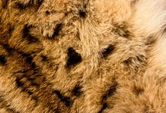 Background of lynx fur. Close-up image Royalty Free Stock Photos