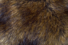 Background of lynx fur Stock Photo