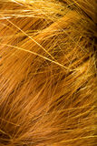 Background - macro on human female hair Royalty Free Stock Photo