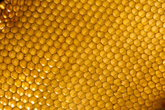 Background. Macro shot of a honeycomb in soft evening light royalty free stock images