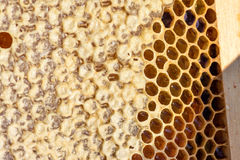 Background. Macro shot of a honeycomb in soft evening light stock image