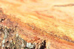Background macro Tree stumps. Surface of the Tree stumps in the forest is Destructive cuts Royalty Free Stock Photo