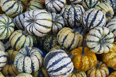 Background made of colorful gourds Royalty Free Stock Photo