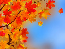 Background made of autumn leaves. EPS 8 Stock Photo