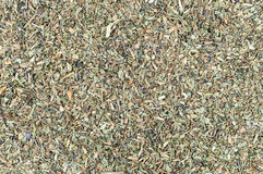 Background made of basil spice Stock Images