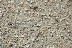 Background made of beach sand and seashells. White sandy beach with specific texture stock photography