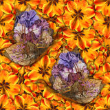 Background made of butterflies of various flowers Stock Photography
