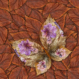 Background made of butterflies of various flowers Royalty Free Stock Photo