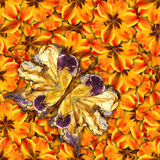 Background made of butterflies of various flowers Royalty Free Stock Image