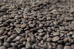 Background made of coffee beans royalty free stock image