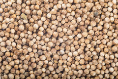 Background made of coriander seeds Royalty Free Stock Images