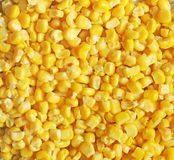 Background made of corn. Food background royalty free stock photos