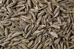 Background made of cumin seeds Royalty Free Stock Images