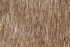 Background is made from dried grass. Royalty Free Stock Photos
