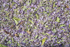 Background made of dried pennyroyal Royalty Free Stock Photo