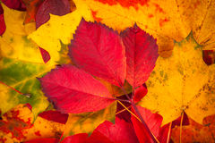 Background made of fallen autumn leaves Royalty Free Stock Photography