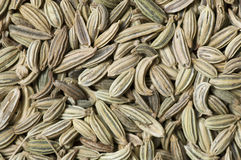 Background made of fennel seeds Stock Image