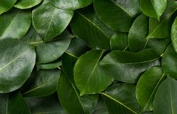 Background made of fresh green leaves. Stock Photography