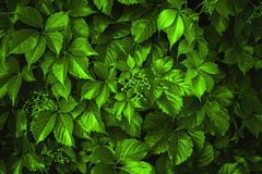 Background made of fresh green leaves toned Chartreuse color. Green dynamic backdrop. Green perfect pattern outdoors stock photo