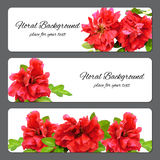 Background made of fresh terry rosehips flowers and place for stock images