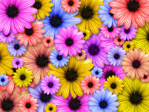 Background Made From Coloured Flowers Royalty Free Stock Image