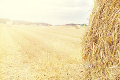 Background made of hay bale on the field. Royalty Free Stock Photo