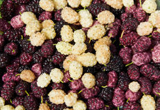 Background made with mulberry heap Royalty Free Stock Photo