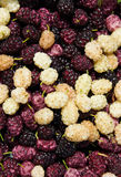 Background made with mulberry heap Royalty Free Stock Photography