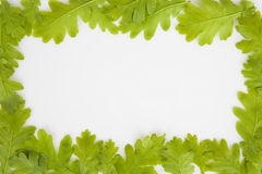 Background made of oak leaves Stock Photography