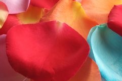 Background made from petals. Background made from assorted colored petals Stock Photography