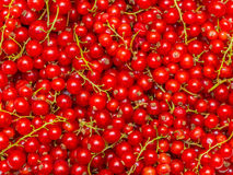 Background made of red currant berries Stock Photo